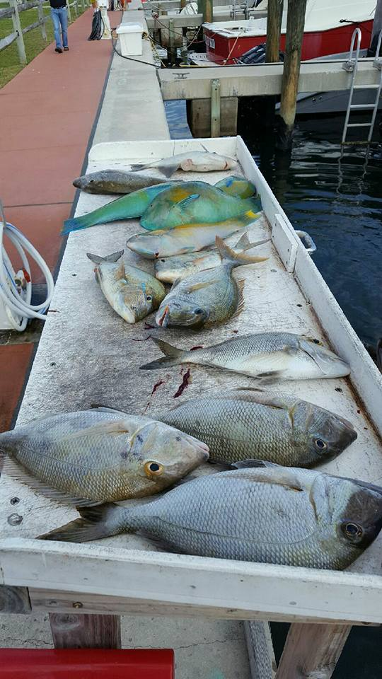 Team mad son blog madson fishing charters west palm beach for Fishing charters west palm beach